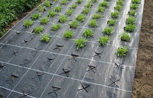 Мульчирующая пленка: как использовать ее на собственном огороде