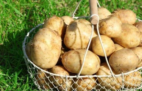 Сортировка картофеля, выбор оптимального решения
