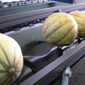 Сортировщик фруктов Oneway 152