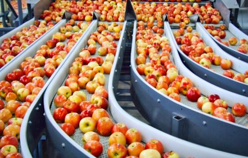 Как повысить продажи яблок с помощью качественной сортировки?