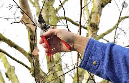Обрізка дерев навесні і восени - поради від професійних садівників