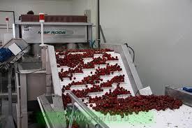 Сортировочная линия для вишни: особенности использования