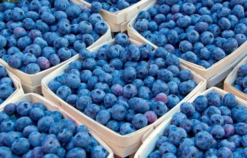 Упаковки для ягод голубики: инновационные разработки